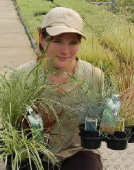 Ornamental grass suppliers UK