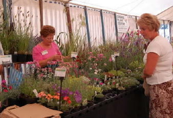 Alpines and Grasses at Sandringham Flower Show