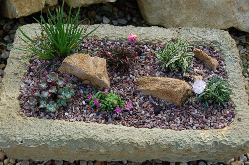 Alpines rockery plants for troughs and containers all hardy and peat free